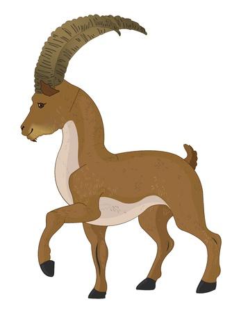 kid goat: Wild Goat or Capra aegagrus, Brown, vector illustration