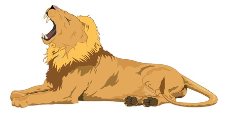 Lion, Male, Yawning, vector illustration  イラスト・ベクター素材