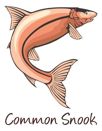 gill: Common Snook, Color Illustration