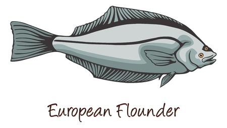 유럽의: European Flounder, Color Illustration