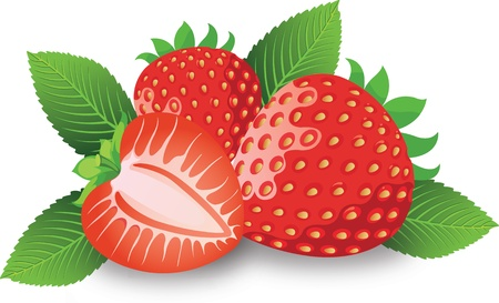 Strawberry, Fruit, Whole and Halved, with Sepals, Leaves and Stems, vector illustration