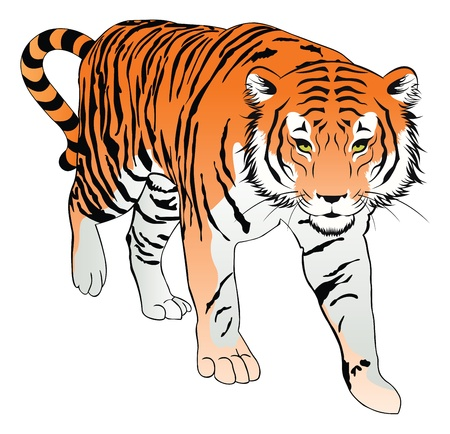 Tiger, Orange, Black and White, vector illustration Illustration