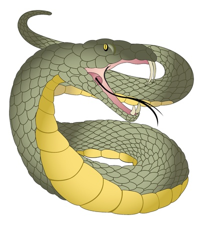 Snake, Green and Yellow, Fangs, Forked Tongue, vector illustration Vector