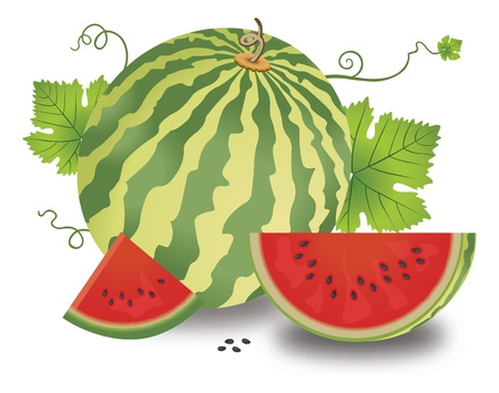 Watermelon, Fruit, Whole and Sliced, with Leaves and Vines, Seeds, vector illustration