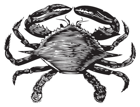 Old engraving from Trousset Encyclopedia of a blue crab, black and white, vectorized using live trace.