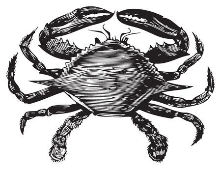 cangrejo: Grabado antiguo de la Enciclopedia Trousset de un cangrejo azul, blanco y negro, vectorizado con Live Trace.