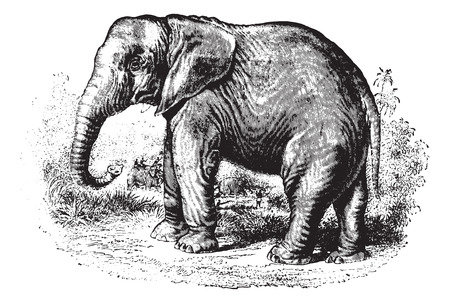 ancient elephant: Elephant in forest, vintage engraved illustration. Animaux Sauvages et Domestiques - For kids - 1892.
