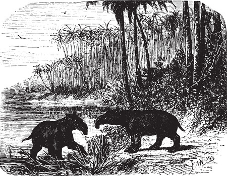 Two giant Anteaters in forest, vintage engraved illustration. Animaux Sauvages et Domestiques - For kids - 1892. Vector