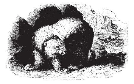 Bear, vintage engraved illustration. Animaux Sauvages et Domestiques - For kids - 1892. Vector