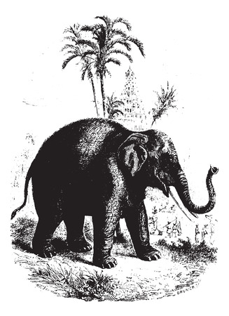 wildlife reserve: Elephant in village, vintage engraved illustration. Animaux Sauvages et Domestiques - For kids - 1892.
