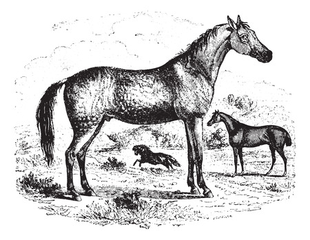 Horse on field, vintage engraved illustration. Animaux Sauvages et Domestiques - For kids - 1892.