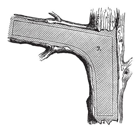 maderas: �C�mo un �rbol se convierte en tablas - secci�n Skeg utilizado en la construcci�n naval, cosecha ilustraci�n grabada. Le Magasin Pittoresque - Larive y Fleury - 1874