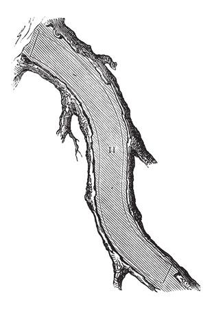 maderas: �C�mo un �rbol se convierte en tablas - secci�n de la rodilla Volver, cosecha ilustraci�n grabada. Le Magasin Pittoresque - Larive y Fleury - 1874 Vectores