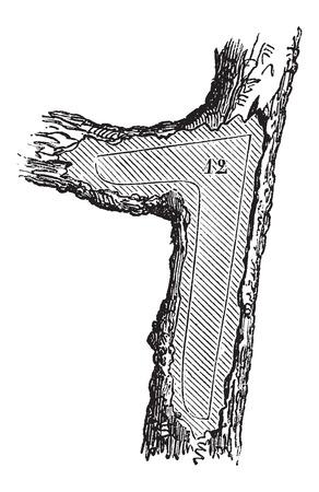 construction navale: Comment un arbre est fait en bois d'?uvre - section gaillard utilis� dans la construction navale, mill�sime grav� illustration. Le Magasin Pittoresque - Larive et Fleury - 1874 Illustration