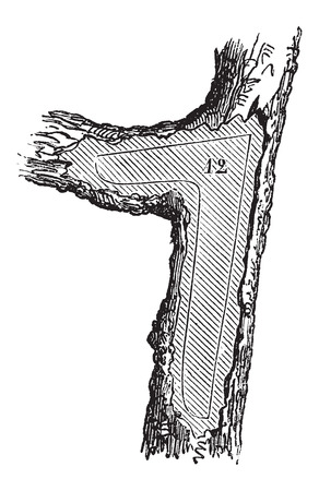 felling: How a Tree is Made into Lumber - Forecastle section used in shipbuilding, vintage engraved illustration. Le Magasin Pittoresque - Larive and Fleury - 1874
