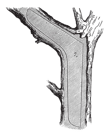 felling: How a Tree is Made into Lumber - Transom section used in shipbuilding, vintage engraved illustration. Le Magasin Pittoresque - Larive and Fleury - 1874 Illustration