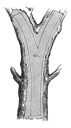maderas: �C�mo un �rbol se convierte en tablas - secci�n Tenedor, cosecha ilustraci�n grabada. Le Magasin Pittoresque - Larive y Fleury - 1874