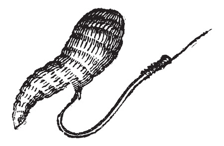 maggot: Single Fish Hook with Bait, vintage engraved illustration. Le Magasin Pittoresque - Larive and Fleury - 1874