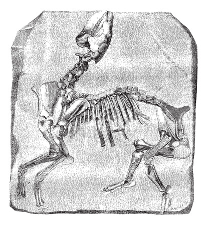comparative: Skeleton of the great Paleotherium de Vitry, exhibited in galleries comparative anatomy at the Museum of Natural History. Drawing by M. Delahaye, vintage engraved illustration. Magasin Pittoresque 1874.