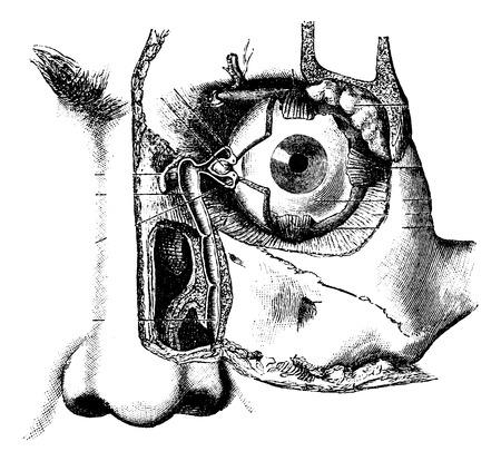 Aparato Lagrimal, cosecha ilustración grabada. Diccionario Usual Medicina por el Dr. Labarthe - 1885 Foto de archivo - 35097728
