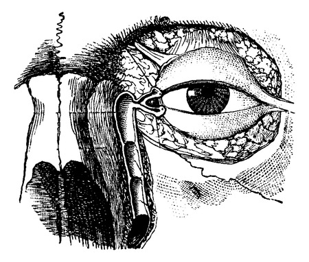 dr: Nasolacrymal Duct, vintage engraved illustration. Usual Medicine Dictionary by Dr Labarthe - 1885 Illustration