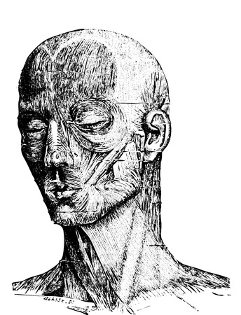 dr: Muscles of the Human Face, vintage engraved illustration. Usual Medicine Dictionary by Dr Labarthe - 1885 Illustration