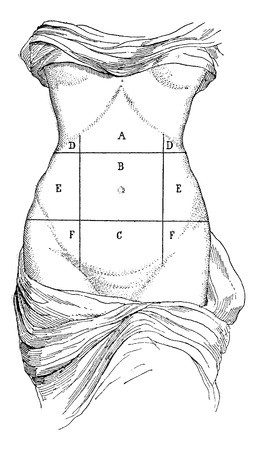 human representation: Abdomen and its subdivisions, vintage engraved illustration. Magasin Pittoresque 1875.
