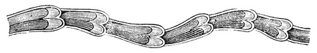 longitudinal: Longitudinal section showing a lymphatic valves, vintage engraved illustration. Usual Medicine Dictionary - Paul Labarthe - 1885.