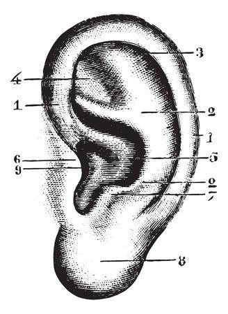 Pinna, millésime gravé illustration. Dictionnaire habitude Médecine - Paul Labarthe - 1885.