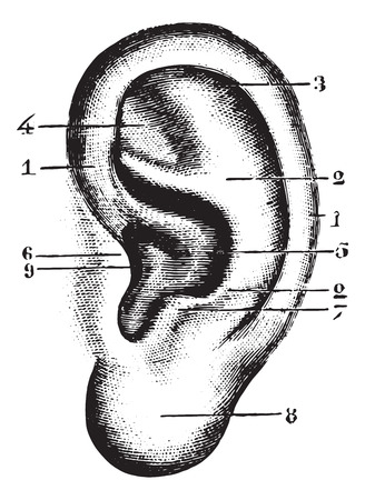 ear: Pinna, vintage engraved illustration. Usual Medicine Dictionary - Paul Labarthe - 1885.