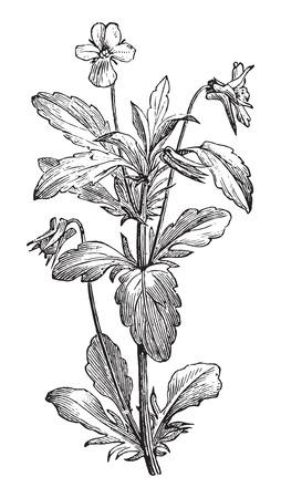 vintage engraved illustration. Usual Medicine Dictionary - Paul Labarthe - 1885. Vettoriali