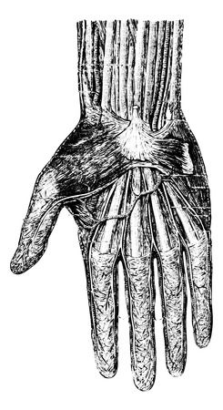 collateral: Surface layer of the hand (palmar surface), vintage engraved illustration. Usual Medicine Dictionary - Paul Labarthe - 1885.