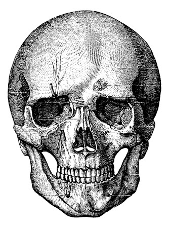 Bony skelet van het gezicht en het voorste deel van de schedel, vintage gegraveerde illustratie. Gebruikelijke Geneeskunde Woordenboek - Paul Labarthe - 1885.