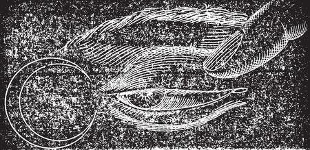 Phosphene nasal, vintage engraved illustration. Usual Medicine Dictionary - Paul Labarthe - 1885. Çizim