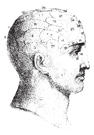 Type cranial given by Spurzheim in profile, vintage engraved illustration. Usual Medicine Dictionary - Paul Labarthe - 1885. 向量圖像