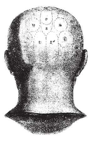 enclose: Type cranial given by Spurzheim, rear view, vintage engraved illustration. Usual Medicine Dictionary - Paul Labarthe - 1885.