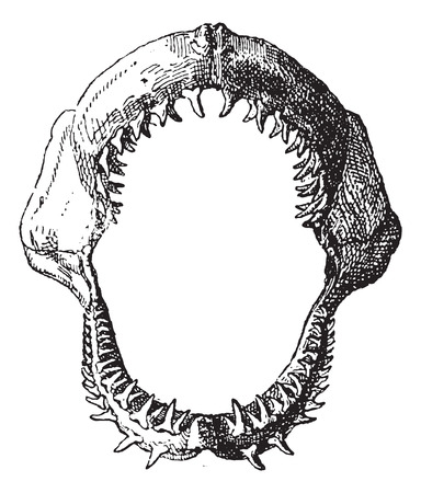 mouth  open: Shark jaw, vintage engraved illustration. Dictionary of words and things - Larive and Fleury - 1895.