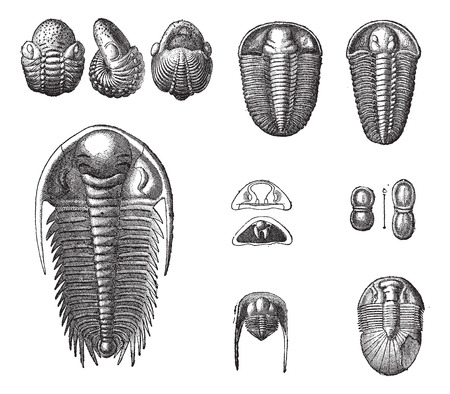paleontology: Trilobites, vintage engraved illustration. Dictionary of words and things - Larive and Fleury - 1895.