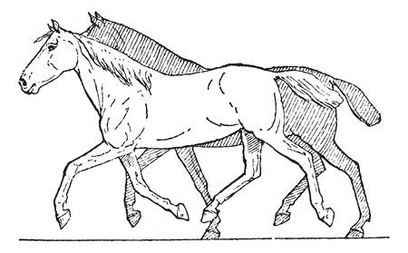 drafje: Draven of Paard Gait, vintage gegraveerde illustratie. Woordenboek van woorden en dingen - Larive en Fleury - 1895