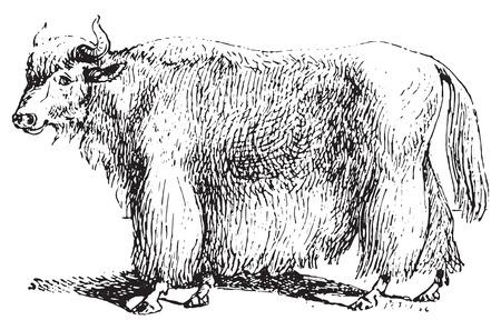 ヤク、ヴィンテージの図を刻まれています。辞書の単語との事 - Larive、フルーリ - 1895年。