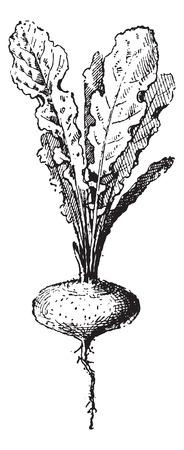 植物、ヴィンテージの刻まれた図を絶賛します。辞書の単語との事 - Larive、フルーリ - 1895年。