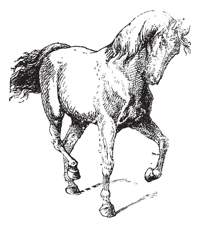 Horse Training, vintage engraved illustration. Dictionary of Words and Things - Larive and Fleury - 1895