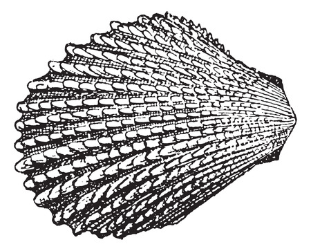 Shell-Lime, vintage engraved illustration. Dictionary of Words and Things - Larive and Fleury - 1895