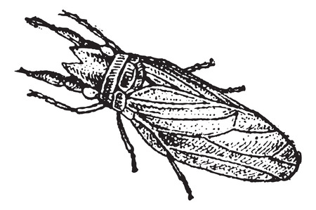 sedge: Caddisfly or Trichoptera, vintage engraved illustration. Dictionary of Words and Things - Larive and Fleury - 1895