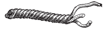 Merlin or 3-Stranded Cordage, vintage engraved illustration. Dictionary of Words and Things - Larive and Fleury - 1895 일러스트