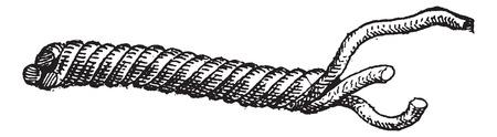 Merlin of 3-Stranded Cordage, vintage gegraveerde illustratie. Woordenboek van woorden en dingen - Larive en Fleury - 1895