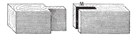 Mortise (left) and Tenon (right), vintage engraved illustration. Dictionary of Words and Things - Larive and Fleury - 1895 Illustration