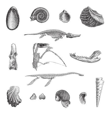 Jurrasic Fauna, met verschillende fossielen, vintage gegraveerde illustratie. Woordenboek van woorden en dingen - Larive en Fleury - 1895