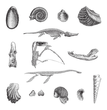 paleontology: Jurrasic Fauna, showing various fossils, vintage engraved illustration. Dictionary of Words and Things - Larive and Fleury - 1895 Illustration