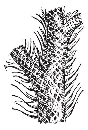 jungle plants: Lepidodendron, showing trunk and grass-like leaf blades, vintage engraved illustration. Dictionary of Words and Things - Larive and Fleury - 1895